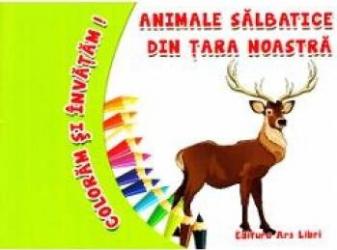 Animale Salbatice Din Tara Noastra Coloram Si Invatam