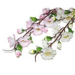 Flori Si Aranjamente Florale Queen Flowers