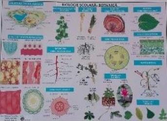 Plansa Biologie scolara - Botanica Carti