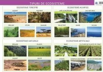 Plansa tipuri de ecosisteme - Florica Alexandrescu
