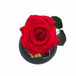 Trandafir Criogenat Rosu in cupola de sticla Queen Flowers Flori si Aranjamente florale