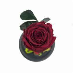 Trandafir Criogenat Visiniu in cupola de sticla Queen Flowers Flori si Aranjamente florale