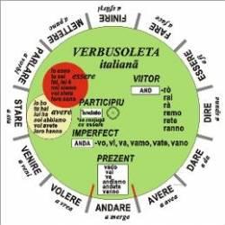 Verbusoleta Italiana - Camelia Stan Dragos Stan